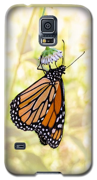 Monarch Butterfly Hanging On Wildflower Galaxy S5 Case