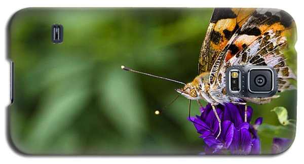 Monarch Butterfly Galaxy S5 Case by Marlo Horne