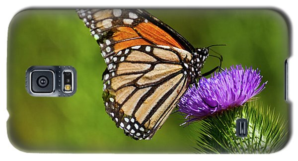 Monarch Butterfly On A Thistle Galaxy S5 Case