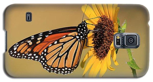 Monarch Butterfly On Sun Flower Galaxy S5 Case