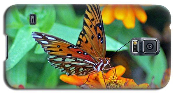 Monarch Butterfly Resting Galaxy S5 Case