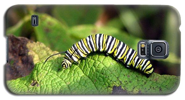 Monarch Caterpillar Galaxy S5 Case