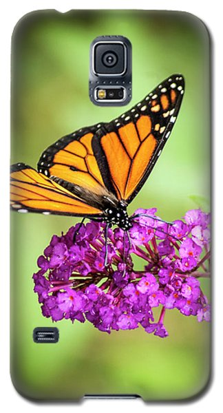 Monarch Moth On Buddleias Galaxy S5 Case
