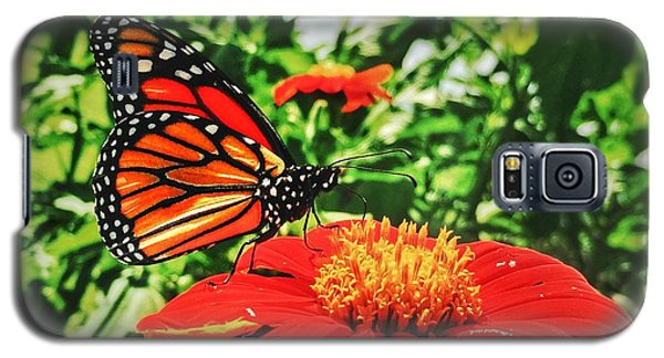 Galaxy S5 Case featuring the photograph Monarch Of The Flowers  by Jame Hayes