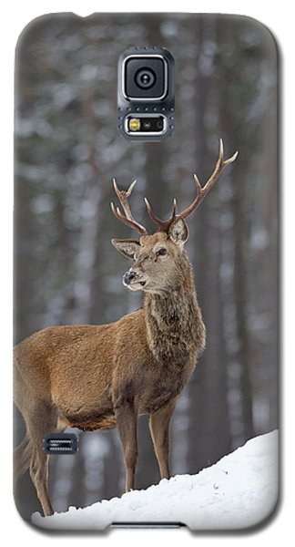 Monarch Of The Woods Galaxy S5 Case