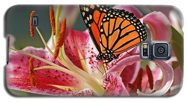 Lily Galaxy S5 Case - Monarch On A Stargazer Lily by Cindi Ressler