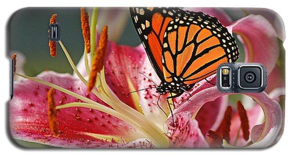 Lily Galaxy S5 Case - Monarch On A Stargazer Lily by Cindi Ressler