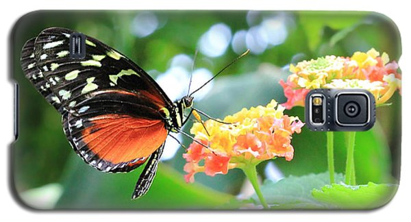 Monarch On Flower Galaxy S5 Case