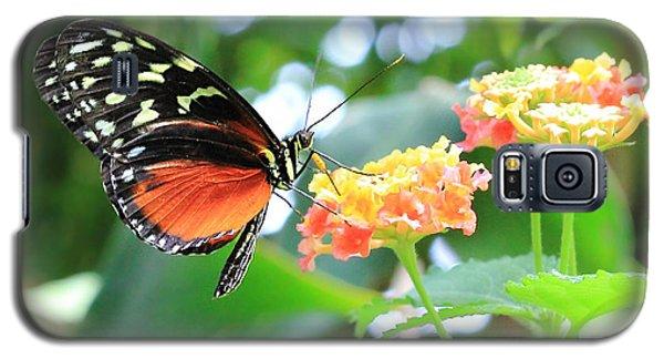 Monarch On Flower Galaxy S5 Case