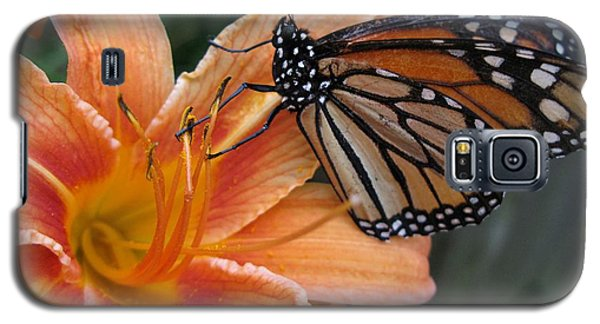 Monarch On Lily Galaxy S5 Case by Carol Sweetwood