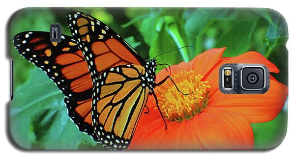 Monarch On Mexican Sunflower Galaxy S5 Case