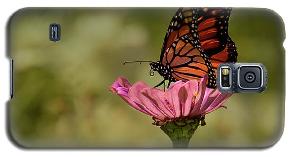 Galaxy S5 Case featuring the photograph Monarch On Pink Zinnia by Ann Bridges