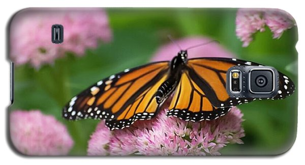 Monarch On Sedum Galaxy S5 Case