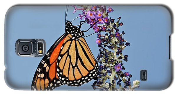 Galaxy S5 Case featuring the photograph Monarch Orange And Blue by Lara Ellis