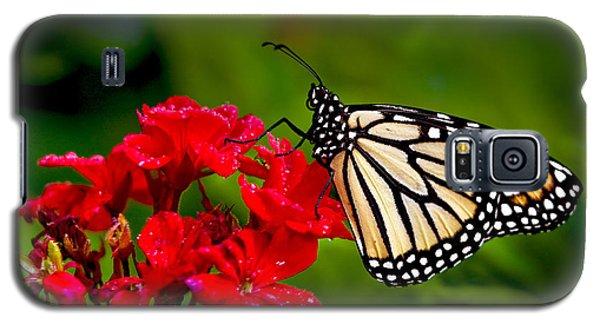 Monarh Butterfly Galaxy S5 Case