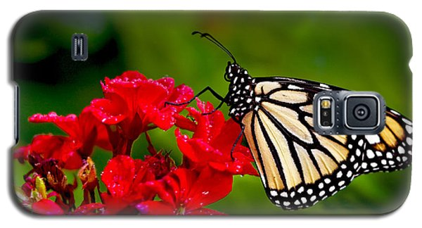 Monarh Butterfly Galaxy S5 Case