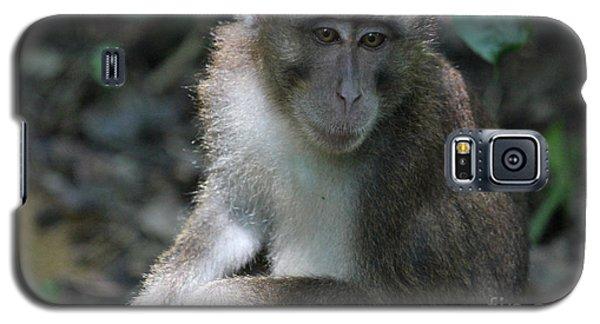 Monkey Business Galaxy S5 Case