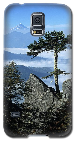 Monkey Puzzle Trees In Huerquehue National Park Galaxy S5 Case