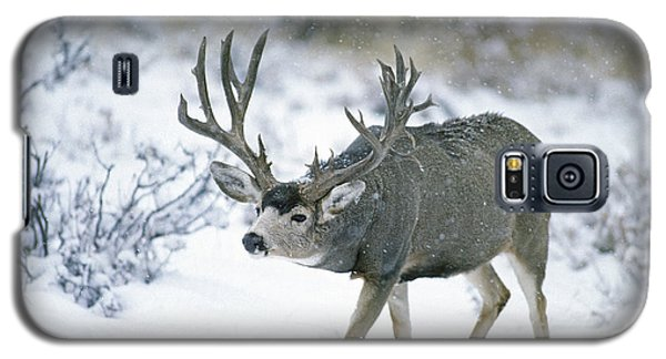 Monster Muley In Snow Galaxy S5 Case
