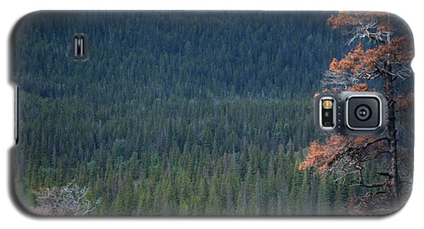 Montana Tree Line Galaxy S5 Case