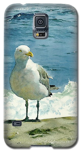 Montauk Gull Galaxy S5 Case by Tom Hedderich
