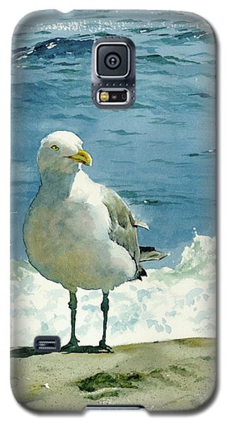 Seagull Galaxy S5 Case - Montauk Gull by Tom Hedderich