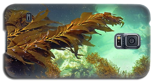 Monterey Bay Seaweed Galaxy S5 Case