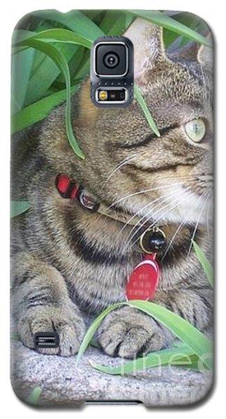 Galaxy S5 Case featuring the photograph Monty In The Garden by Jolanta Anna Karolska