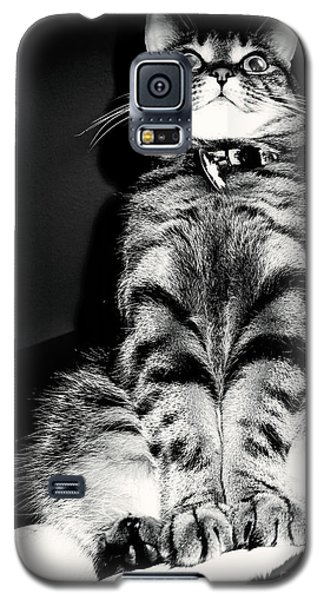 Monty Our Precious Cat Galaxy S5 Case