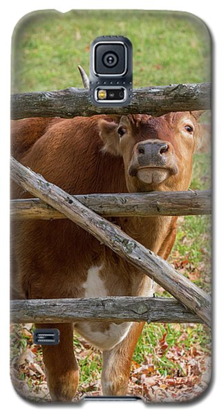 Galaxy S5 Case featuring the photograph Moo by Bill Wakeley