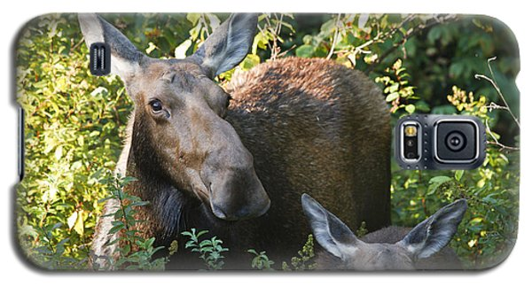 Moose - White Mountains New Hampshire  Galaxy S5 Case