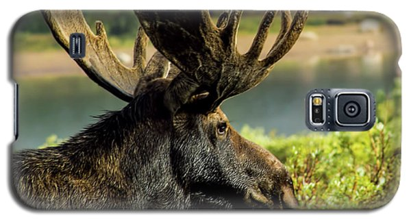 Moose Adventure Galaxy S5 Case by Steven Parker