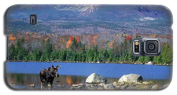 Moose And Mount Katahdin Galaxy S5 Case