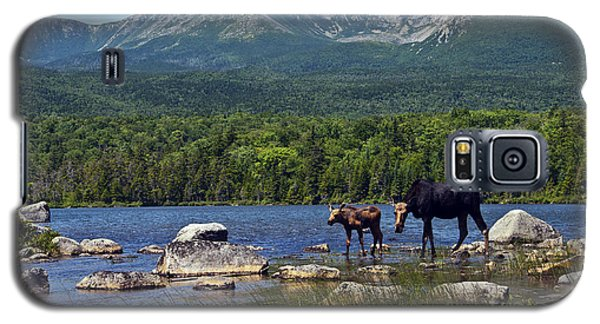 Moose Baxter State Park Maine 2 Galaxy S5 Case