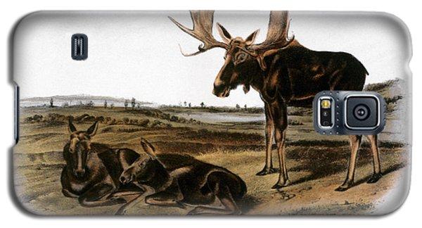 Audubon Galaxy S5 Case - Moose Deer (cervus Alces) by Granger