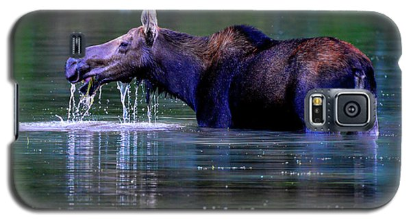 Moose In Swiftcurrent Lake, Glacier National Park Galaxy S5 Case