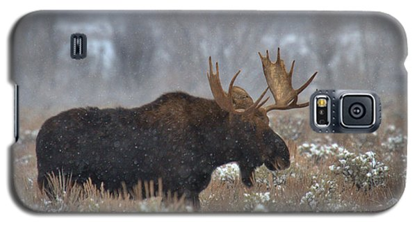 Galaxy S5 Case featuring the photograph Moose In The Fog by Adam Jewell