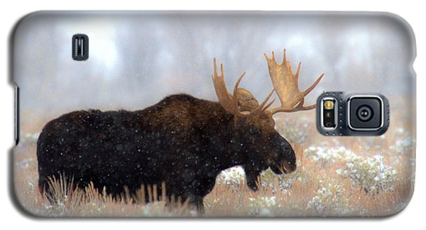 Galaxy S5 Case featuring the photograph Moose In The Fog Silhouette by Adam Jewell