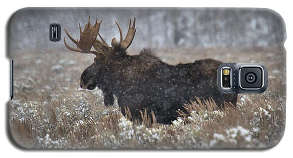 Galaxy S5 Case featuring the photograph Moose In The Snowy Brush by Adam Jewell