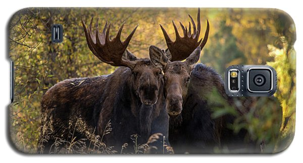 Galaxy S5 Case featuring the photograph Moose Love by Mary Hone