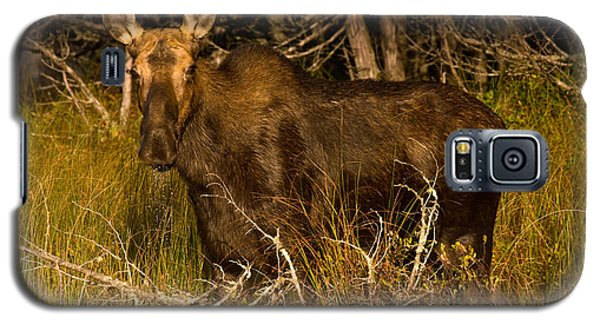 Moose Of Prong Pond Galaxy S5 Case