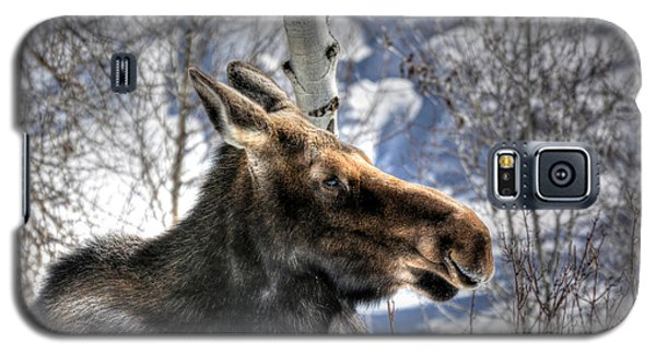 Moose On The Loose Galaxy S5 Case