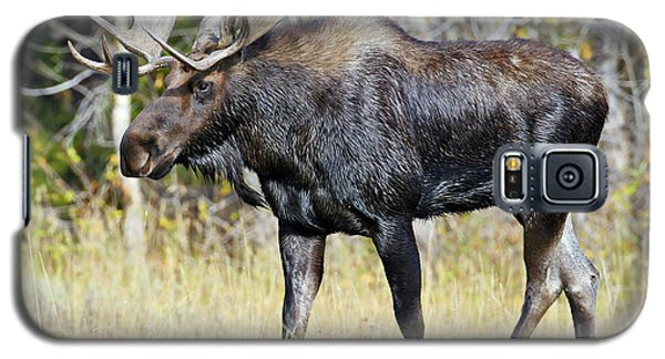 Moose On The Move Galaxy S5 Case