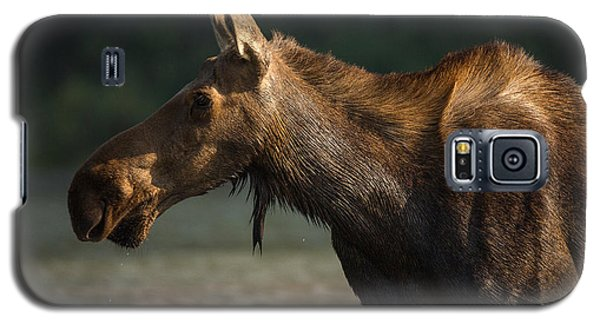 Moose Portrait // Glacier National Park  Galaxy S5 Case
