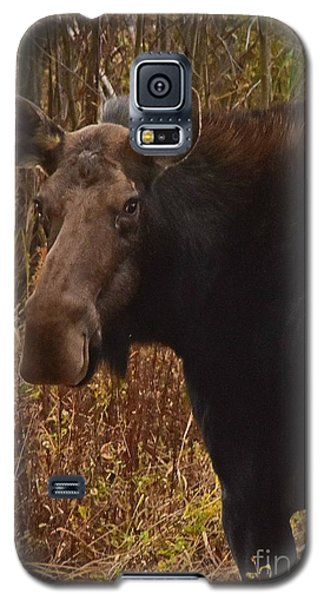Galaxy S5 Case featuring the photograph Moose Portrait by Sam Rosen