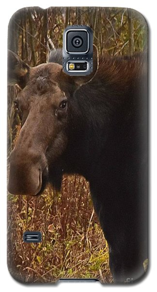 Moose Portrait Galaxy S5 Case