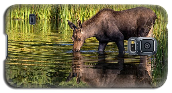 Galaxy S5 Case featuring the photograph Moose Reflections by Mary Hone