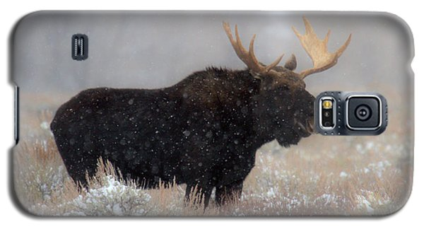 Galaxy S5 Case featuring the photograph Moose Winter Silhouette by Adam Jewell