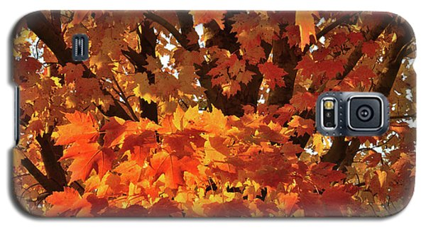 Galaxy S5 Case featuring the photograph Moraine Hills Sugar Maple by Ray Mathis