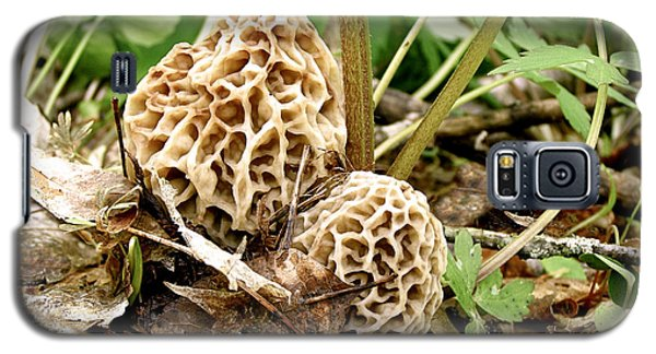 Morel Mushrooms Galaxy S5 Case by Angie Rea